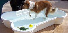 zwembad voor honden - pool dog