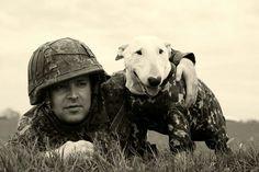 Military Bull Terrier