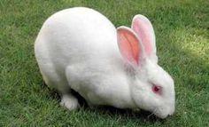 kelinci — Rambler/images