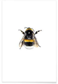Bumblebee 01 als Poster door Janine Sommer Bumblebee Drawing, Bumble Bee Tattoo, Love Drawings, Animal Drawings, Vogel Illustration, Bumble Bee Illustration, Bee Painting, Yellow Wall Art, Flower Doodles
