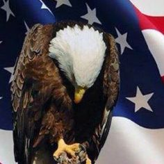 ♥I am an American. I believe in God, Family and Country.♥