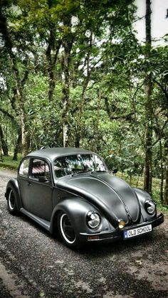 Beetles love this car omg