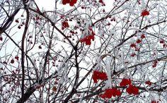 Minnesota early snow