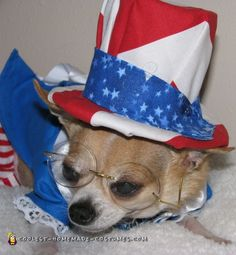 Tequila Rose  your next president in this cool homemade dog costume