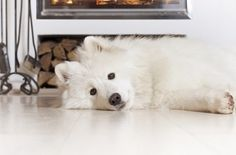 Keeping Pets Safe During Winter Weather Pet Safe, Polar Bear, Husky, Weather, Pets, Safety Tips, Blog Entry, Fireplaces, Animals