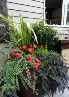 Summer Annuals Planter Container Railing Urban Garden