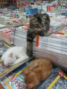 Every bookstore should have a kitten or cat.  This one is lucky to have three.