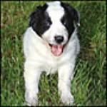 awesome info on training your dog with a clicker.  I can't wait to try this out.