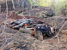 Kondoa World Heritage Site in Tanzania. Illegal charcoal burning pit close to a site with freshly cut logs ready for burning. This is one of the main reasons for deforestation.