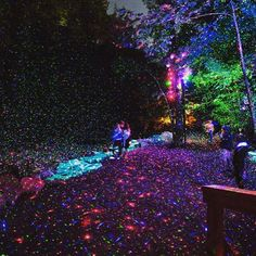 moment factory has transformed the parc de la gorge de coaticook in québec into 'foresta lumina', a nocturnal walk along a magical trail in the forest. Old Montreal, Travel Activities, Parcs, Outdoor Landscaping, Travel Bugs, Love Images, Landscape Art, Trip Planning, Enchanted