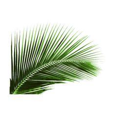 zameraz70 — альбом «СКРАП НАБОРЫ / МОРСКИЕ СКРАП НАБОРЫ / 363 Tropical... ❤ liked on Polyvore featuring filler, plants, backgrounds, decor and flowers
