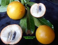 http://www.fruitlovers.com/seedlistUSA.html Buy tropical seeds online