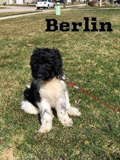 Ebay Kleinanzeigen Dogs Mixed Breed Dog Breeds