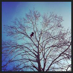 ..platani..tree-Climbing