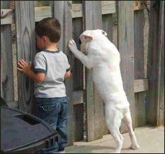 Dog and Kid Spy Through Fence