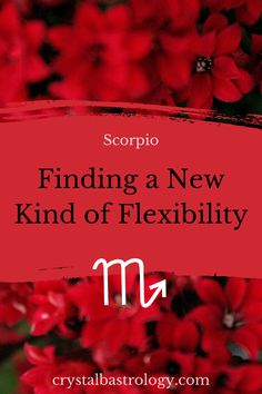 Are you Scorpio? Learn everything you need to know about your Zodiac Sign with a professional astrologer CrystalB. *** #astrology #horoscope #future #planets #moon #sun #zodiacsigns #astro Scorpio Sign, Scorpio Zodiac, Horoscope, Zodiac Signs, Need To Know, Astrology, Planets, Moon, Relationship