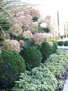 Ogród wśród pól i wiatrów - strona 226 - Forum ogrodnicze - Ogrodowisko