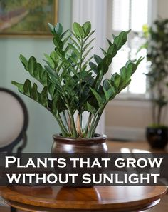 If you have a shady area or you don't link sunlight in your house, best news are that there are plants that love shade. Check it out: