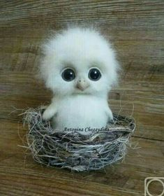Águila bebé