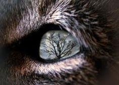 Eye of the Wolf Wolf Spirit, Spirit Animal, Wolf Eyes, Wolf Face, Wolf Husky, Types Of Animals, Eye Art, Beautiful Creatures, Illustration
