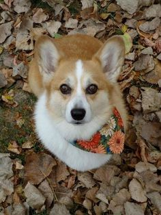 """Autumn"" bandanas that don't match your fur tone. 