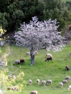 Provence in April