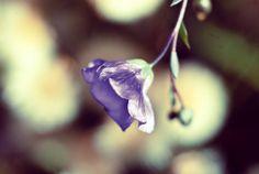 Flower by ZoiShop