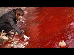 Russian river turns blood red so does massive Lake in Iran, antartica and sea in Australia OMG !!! - YouTube