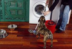 Zaburzenie obsesyjno-kompulsywne u psa