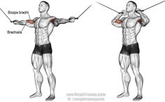 Overhead cable curl. Targets your brachialis, while your biceps brachii and brachioradialis act as synergists. Also known as the high cable curl.