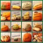 Winter Squash Guide   Co+op, welcome to the table Pumpkin Soup, Pumpkin Carving, Winter Squash Varieties, Sweet Dumplings, Feeding A Crowd, Green And Orange, The Cure, Table, Food