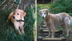 21 Touching First And Last Photos Of Pets Who Lived A Life Well-Loved For the love of animals. Pass it on.