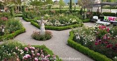 California wine country garden with gravel paths and outdoor sitting area in formal room of rose flower beds edged in low boxwood hedges for English (Austin) roses