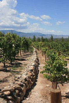 #page springs #az #arizona #vineyards