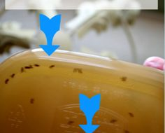 How to kill fruit flies ~ Results in 24 hours.
