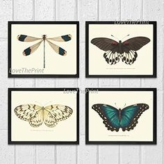 Butterfly Print Set of 4 Prints Antique Art Beautiful Colored Colorful Natural Science Summer Garden Nature Home Room Wall Decor Unframed NODD ** You can get additional details at the image link.