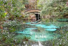 5 things to do in the Ocala National Forest - nature trail bridge at Jupiter Springs