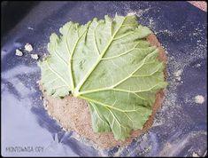 Cabbage, Vegetables, Cement, Food, Gardening, Sculptures, Essen, Lawn And Garden, Cabbages