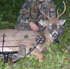 Bowhunting Whitetail Deer , Archery Hunting Tips