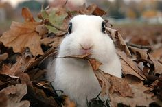 At the same time, there was also a white bunny who enjoyed tunneling through fallen leaves.