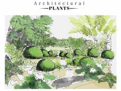 From Architectural Plants...useful plant illustrations