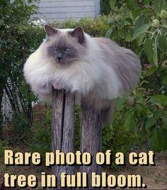 Funny cat joke pic... For more hilarious humor pics