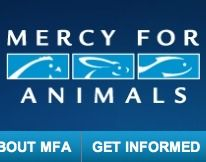 Mercy for Animals: the organization behind many high-profile undercover investigations of cruelty within the nation's leading egg, meat, and dairy producers.
