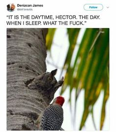 """33 Stupid Memes To Cure Those Monday Blues - Funny memes that """"GET IT"""" and want you to too. Get the latest funniest memes and keep up what is going on in the meme-o-sphere. Funny Animal Memes, Cute Funny Animals, Funny Cute, The Funny, Funny Jokes, Funny Memes 2017, Sarcastic Memes, 2016 Funny, 9gag Funny"""