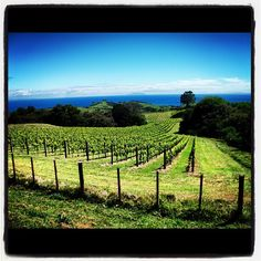 On the road to Stony Batter, Waiheke Island, NZ Waiheke Island, Stony, Auckland, New Zealand, Vineyard, Things To Do, World, Outdoor, Instagram