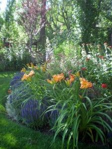 Border garden with russian sage & day lilies
