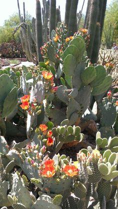 Desert Botanical Garden Phoenix, Arizona