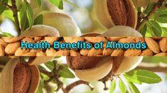 10 Types Of Tea And Their Health Benefits - Windour Health Benefits Of Almonds, Matcha Benefits, Coconut Health Benefits, Benefits Of Coconut Oil, Oil Benefits, Freezing Lemons, Tomato Nutrition, Types Of Tea, Matcha Green Tea
