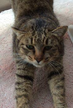 里親さんブログ迷い猫 保護しています! - http://iyaiya.jp/cat/archives/68899