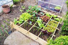 A horta pode medirapenas 1 m2, permitindo que se cultive alimentos em pequenos espaços.